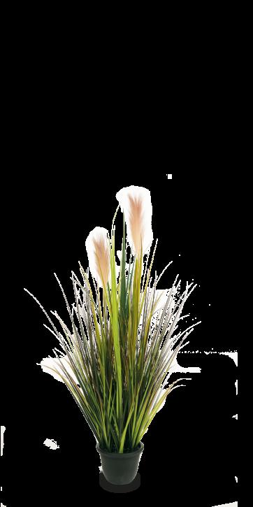 Pampasgras mit Blüten 120 cm